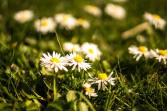 Jarní očista